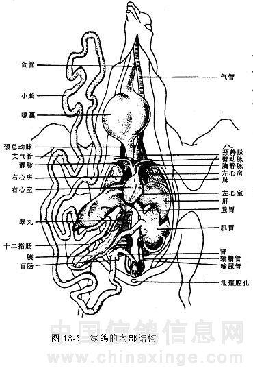 简笔画 教学图示 手绘 线稿 370_547 竖版 竖屏