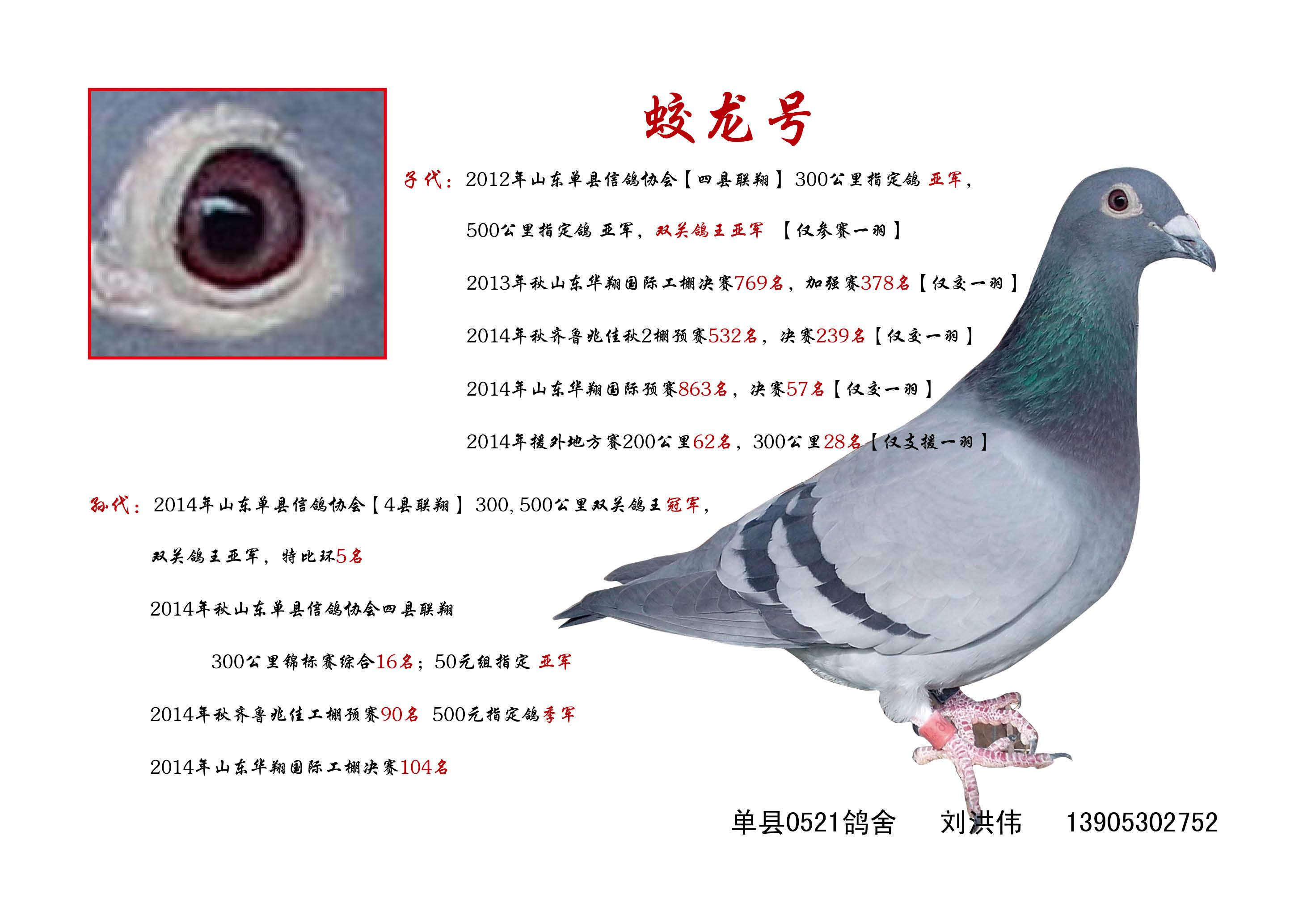 动物 鸽 鸽子 教学图示 鸟 鸟类 2924_2067