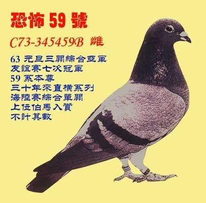 动物鸽大象鸽子图示鸟教学405_400耳朵的鸟类教学设计详图片