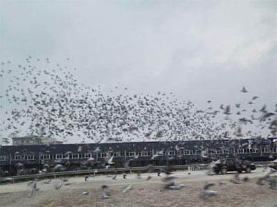 预测:江苏超远程联赛几天见鸽?