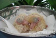 考眼力:图中幼鸽分别是几日龄?