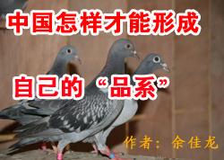 """中国怎样才能形成自己的""""品系"""""""