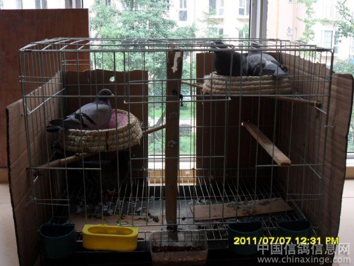 史上最小鸽舍(图) -信鸽园地焦点图片新闻