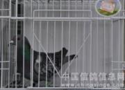 广东益全700公里霸王赛前十名(图)