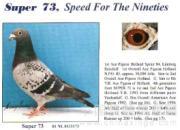 我与凡龙超级73鸽系
