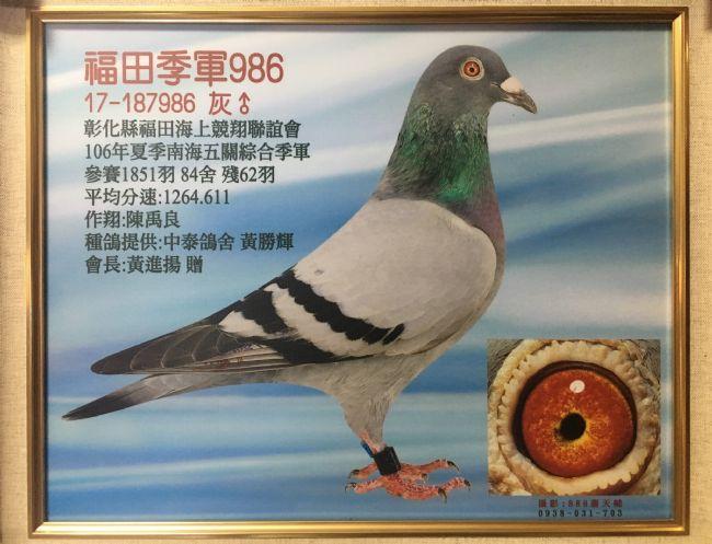 台湾中泰鸽舍上半年记录