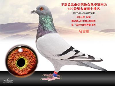 获奖鸽欣赏:吴忠市第四关前十名