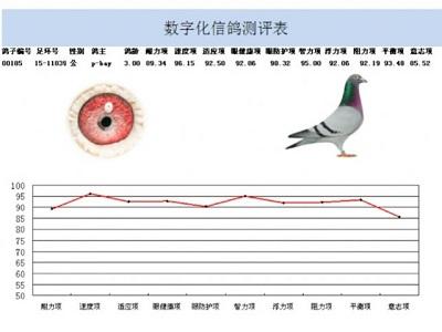 运用数据分析剖析鸽子