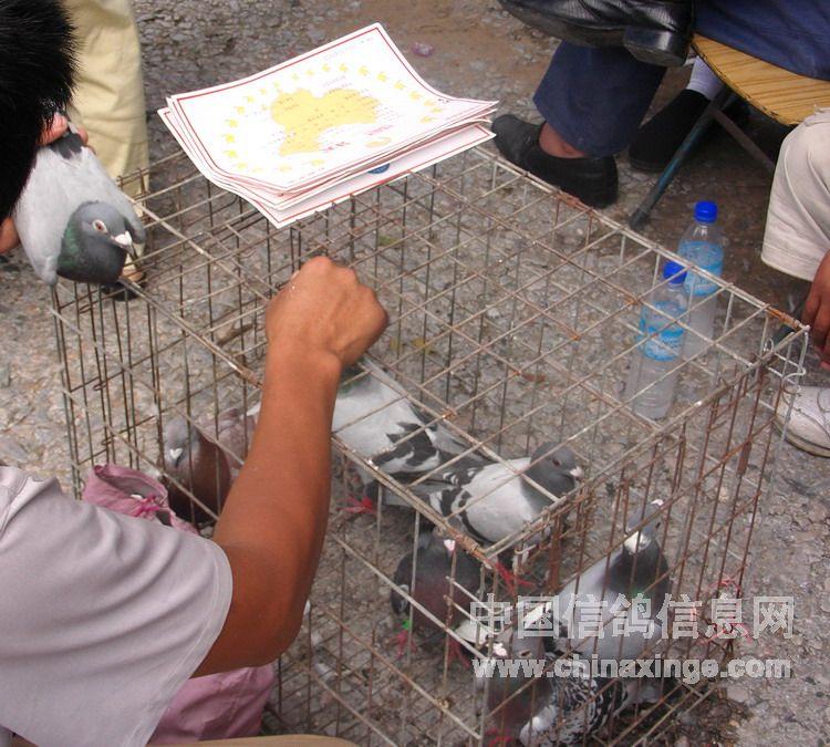 河南郑州鸽市剪影-中国信鸽信息网