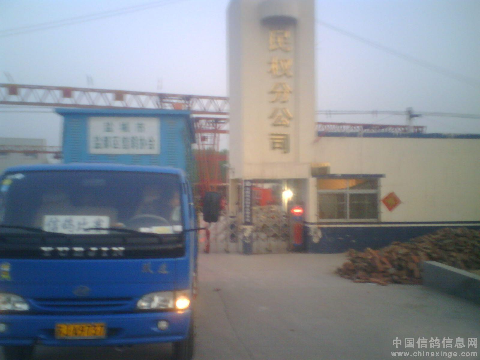 中国 江苏/中午14时不到赛鸽开始陆续报进。