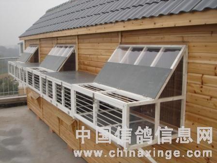 中国 鸽舍/五、空间与饲养密度...