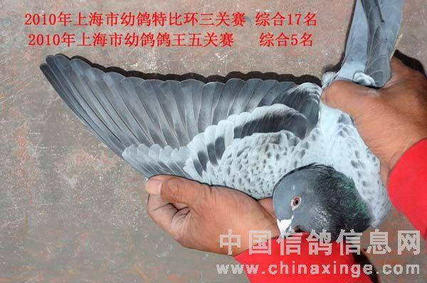 传访全国千公里联赛上海冠军鸽主(图)-中国