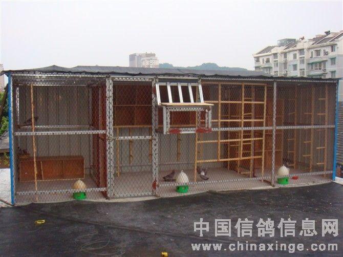 ... 笼 中国 信鸽 信息 网 相册 537 403 信鸽 笼 设计 640 480