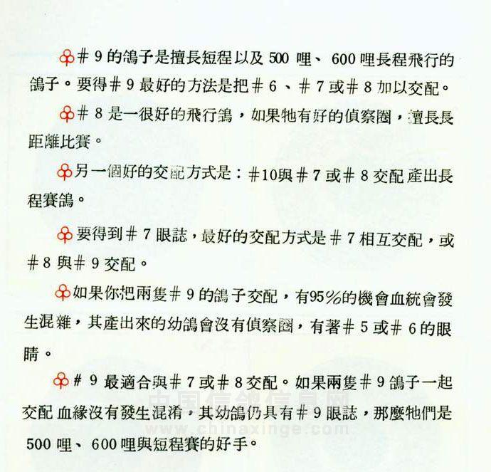 信鸽视频鉴别天落鸟_名家鸽眼配对经验_信鸽知识_信鸽365_中国信鸽第一资讯信息门户网站