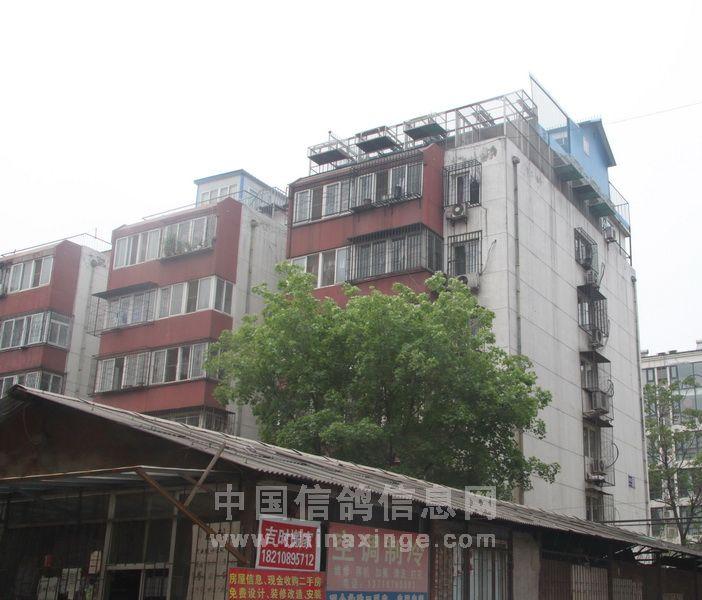 李先生的鸽棚在大兴区滨河小区,六楼顶上,共有六间.-北京百家铭
