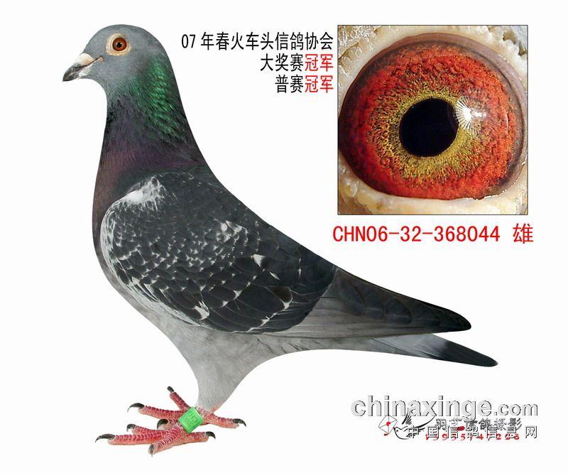 中国 有方/相鸽有方(八)
