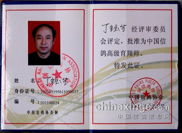 """中国信鸽协会_""""浪里白条""""——丁钰生-峥嵘风云赛鸽中心-中国信鸽信息网 www ..."""