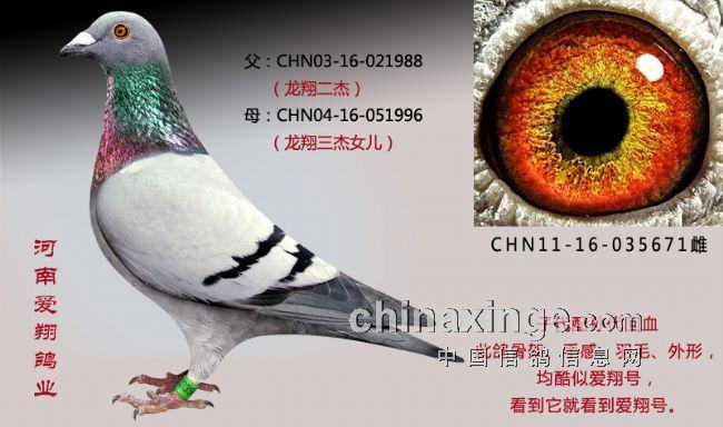 桑杰士 李俊/鸽眼配对是赛鸽中的一个环节,什么样的鸽眼都能出冠军,鸽子飞...
