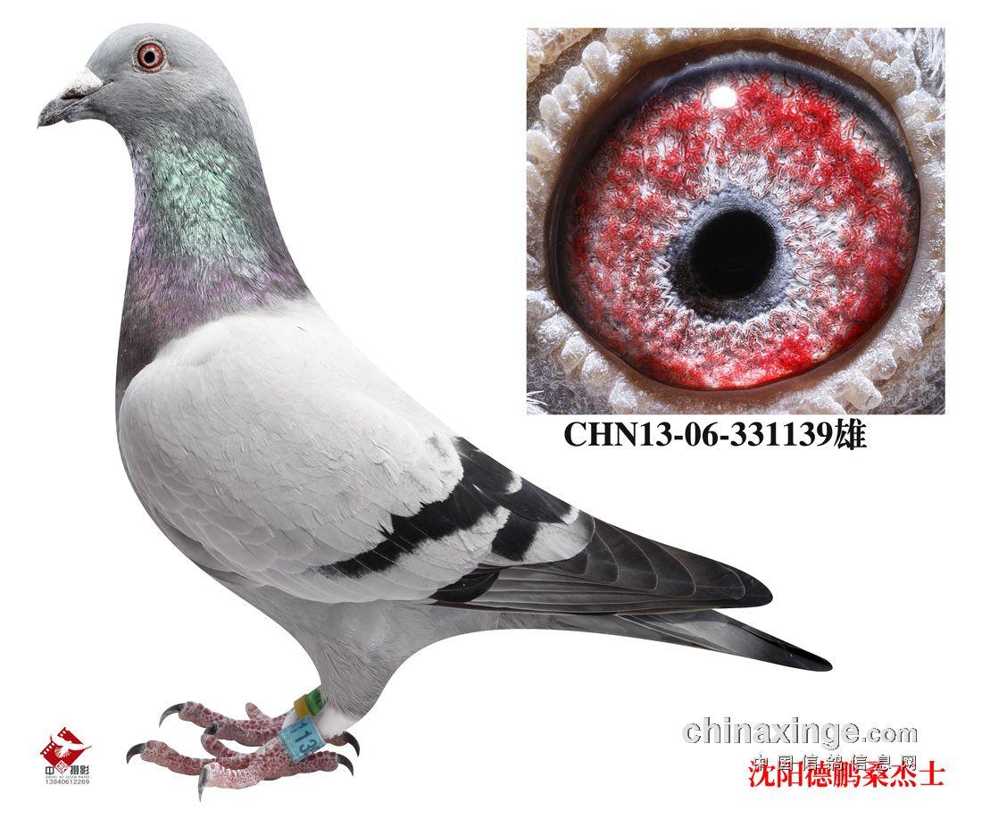 李俊/鸽眼配对是赛鸽中的一个环节,什么样的鸽眼都能出冠军,鸽子飞...