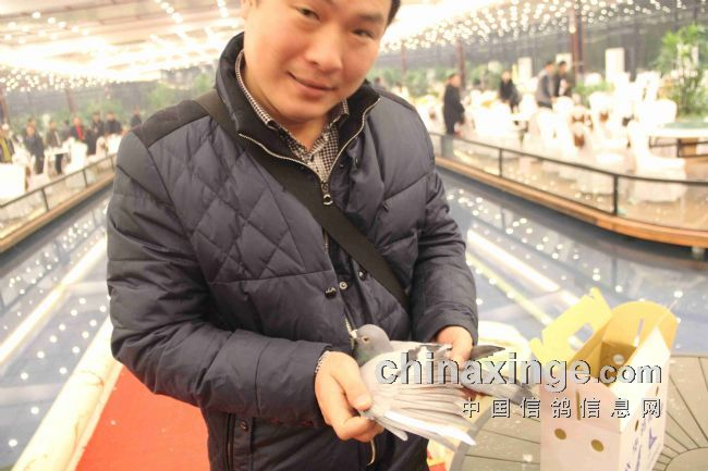上海黄金海岸公棚冠军戴瑞帮(图)