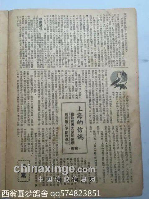 上海信鸽发展历程