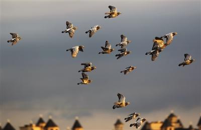 小仓有一群放痕迹的人(图)被温州鼠咬了一鸽子怎么办图片
