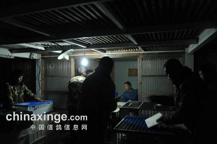 北京惠翔中国红赛鸽峰会热点赛放飞