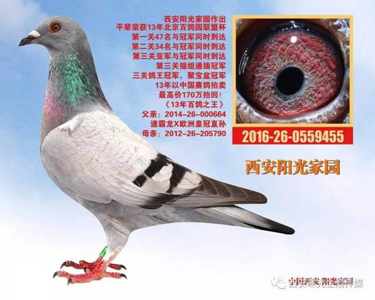 E:\(2)信鸽\(1)新疆飞天公棚\3e3bc56c056e363bb63dceeedac42601.jpg