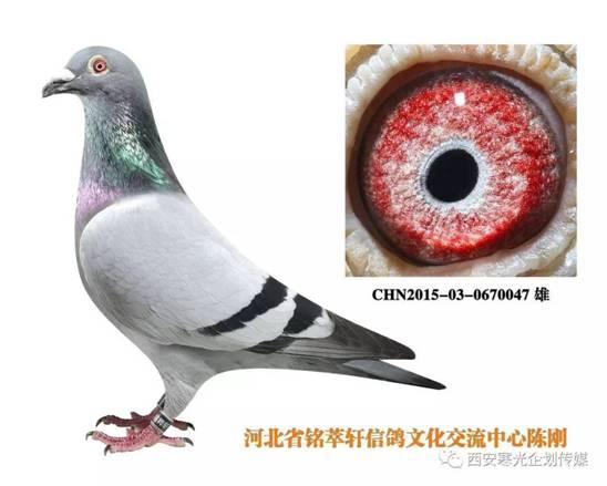 E:\(2)信鸽\(1)新疆飞天公棚\8a1afe58517f2445acc3a91c7ee95ce4.jpg