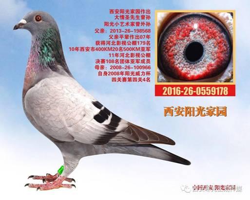 E:\(2)信鸽\(1)新疆飞天公棚\c99859147fa2fc49a37a7aff4c60b64e.jpg