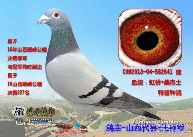 大象鸽小鸟鸽子图示鸟教学650_462动物世界动物与鸟类图片