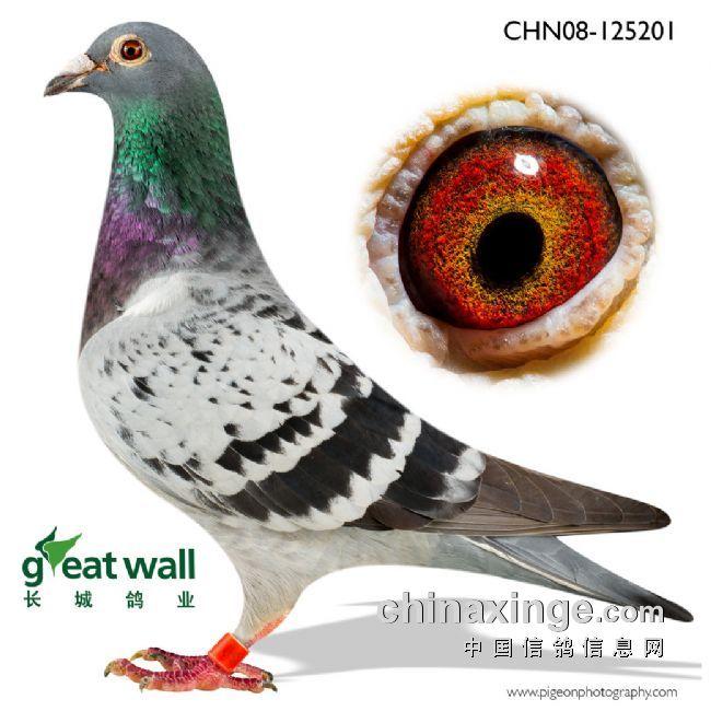 教学鸽庄园鸽子图示鸟动物650_650鸟类蚂蚁植树图片