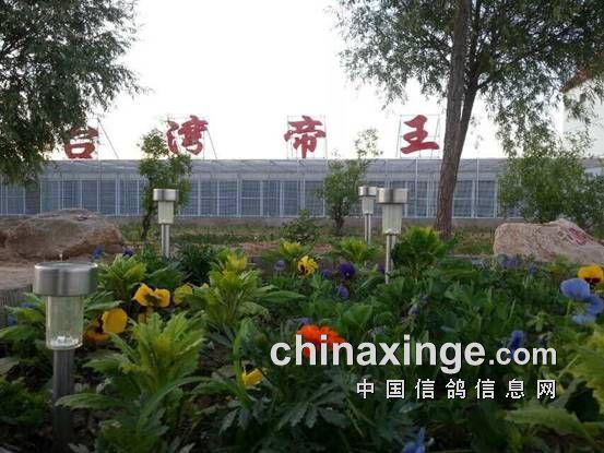 走进花园般的台湾帝王鸽舍基地